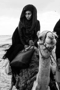 Veronica-camel
